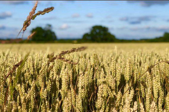 UK Farmers Market Listing